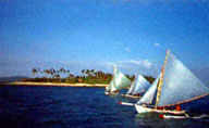 Paraw Regata Race